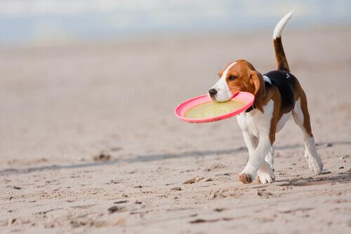 Come giocare con il vostro cane in estate?