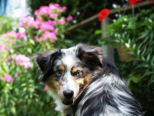 Cosa fare nel caso in cui si venga morsi da un cane?