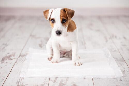 cucciolo sopra il tappetino