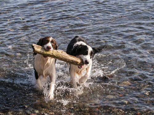 Qual è il partner ideale per il vostro cane?