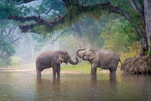 11 animali in pericolo di estinzione