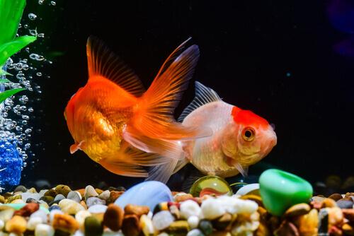 Come nutrire i pesci in modo corretto