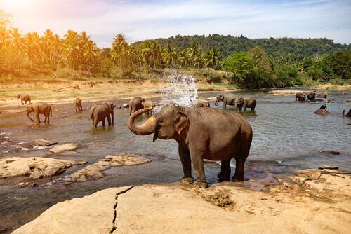 elefante si bagna