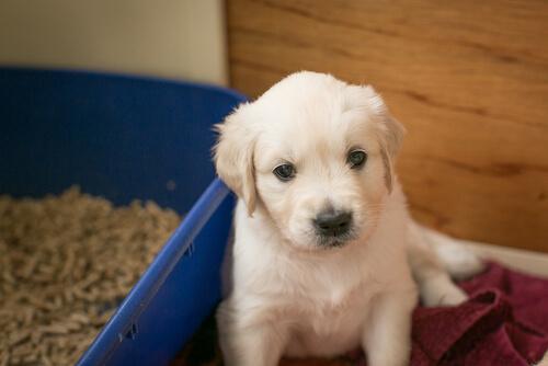 Come evitare che un cane faccia i bisogni nella cuccia?