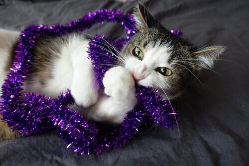 gatto che gioca con un addobbo natalizio