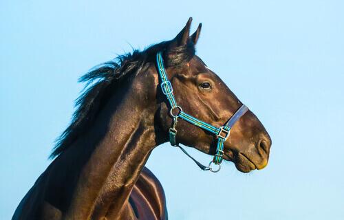 Conoscere e capire il carattere del cavallo