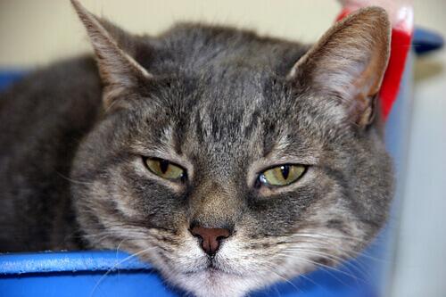 l'espressione triste di un gattino malato