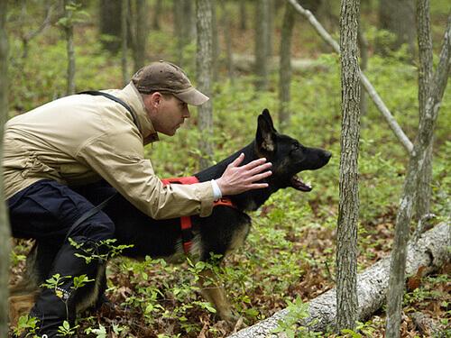 Come scegliere il miglior addestratore per un cane?