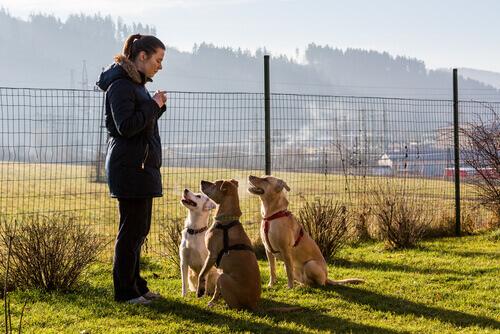 padrona addestra tre cani con il metodo gentile