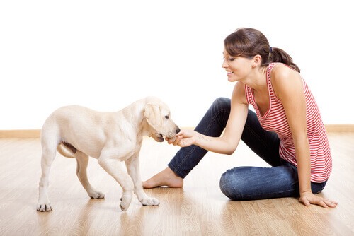padrona gioca con il suo cucciolo in casa
