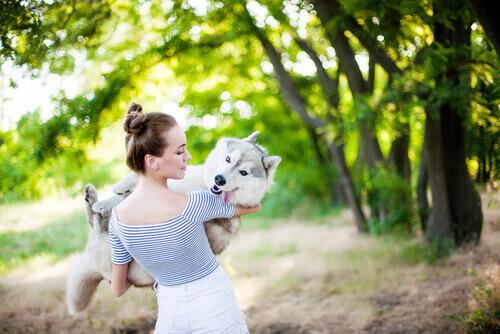 padrona prende in braccio il suo husky