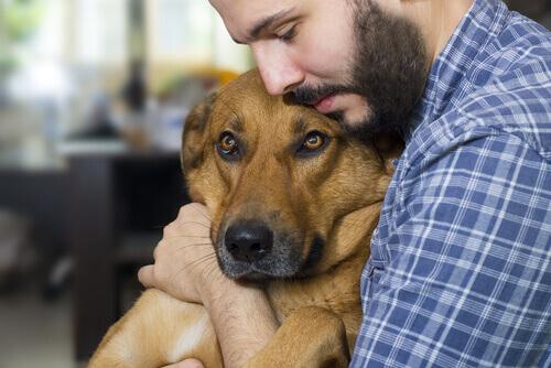 Padrone abbraccia con affetto un cane malato