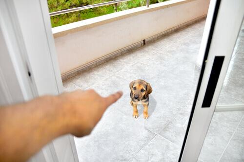 padrone che sgrida un cucciolo di beagle