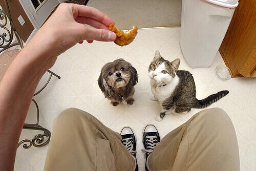 Cani e gatti possono mangiare le stesse cose?