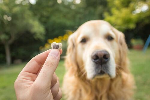 Padrone offre un croccantino premio al suo cane