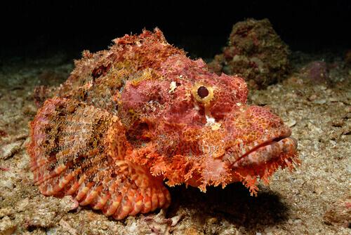 pesce pietra tra animali più velenosi