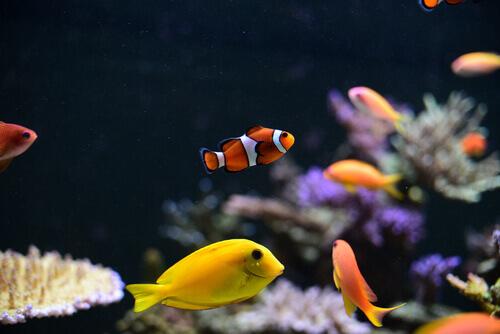 pesci di vario tipo e colorati nuotano in un acquario di casa