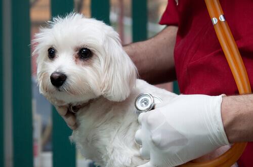 Come scegliere la migliore assicurazione per animali