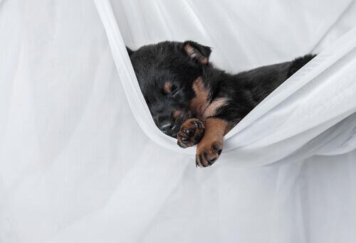 Cani e sonno: perché dormono così tanto?