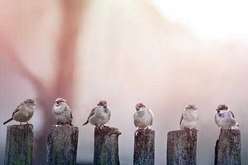 sei passerotti si riposano appoggiati su dei ceppi