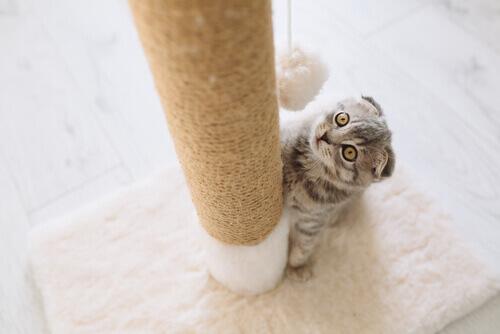 Conosciamo insieme i tipi di tiragraffi per gatti