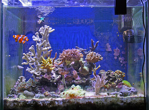 un acquario completo con coralli e pesci tropicali