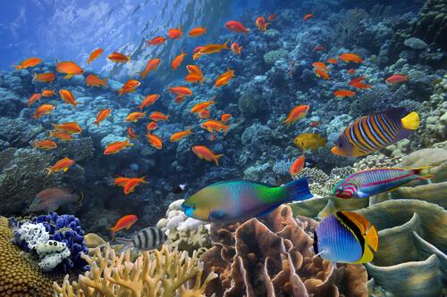un banco di pesci tropicali in libertà vicino alla barriera corallina