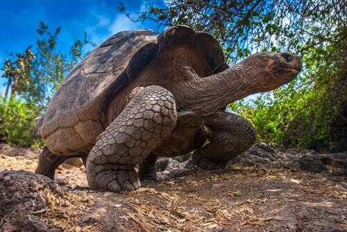 Ciclo di vita delle tartarughe: imparare a conoscerlo