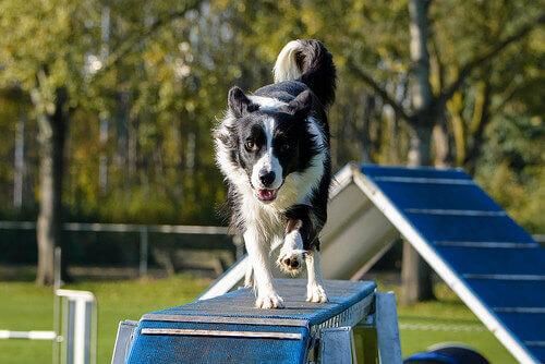 8 regole non scritte per i parchi per cani