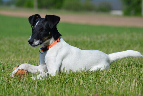 Dare corticosteroidi al cane: quando usarli e perché