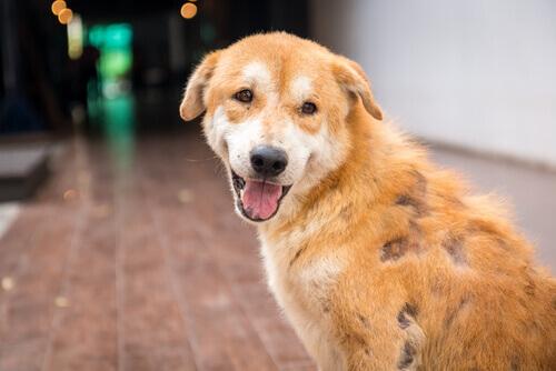 un cagnolino malato di scabbia