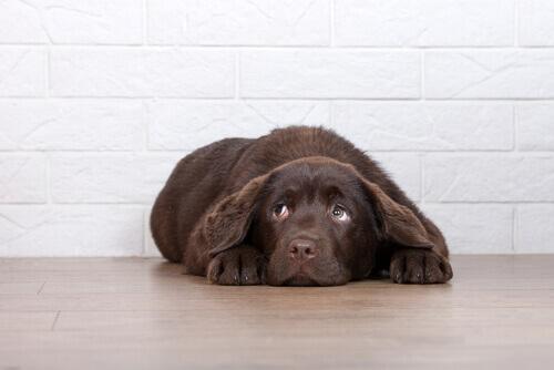 6 motivi per non punire il cane