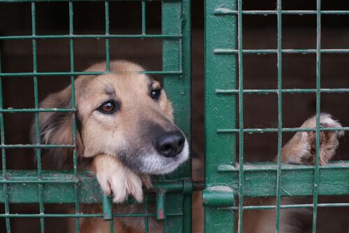 La difficile situazione dei rifugi per animali abbandonati