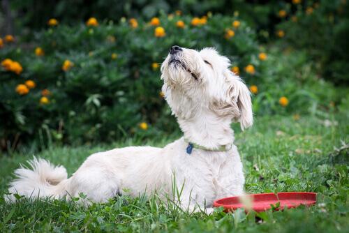 5 odori che danno fastidio ai cani