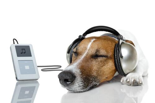 Fate rilassare il vostro cane con Relax My Dog