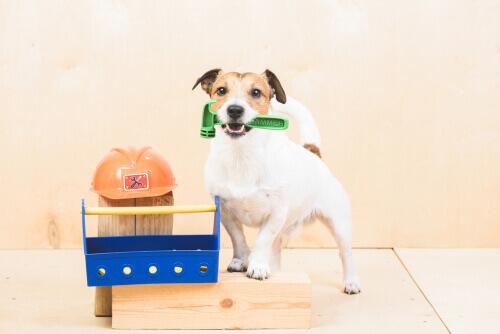 Compiti che potete insegnare al vostro cane