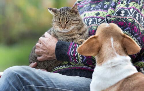 un cane guarda con gelosia il gatto in braccio al padrone