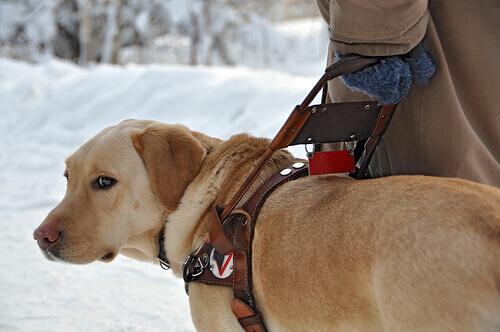 un cane guida sulla neve