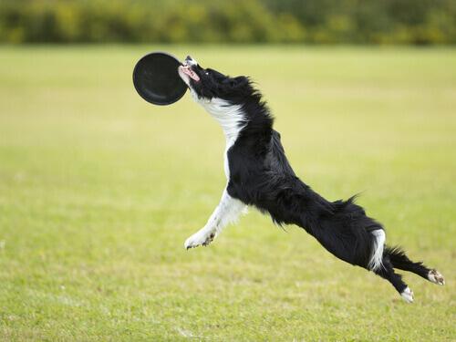 Disc dog: giocare nel parco con il cane