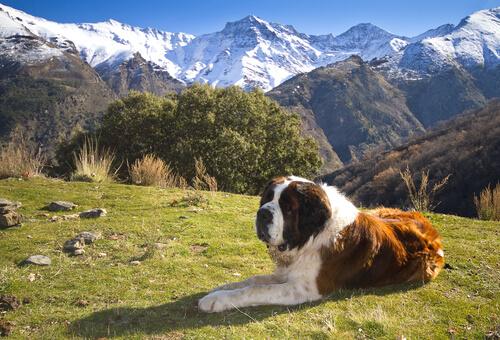 San bernardo in montagna