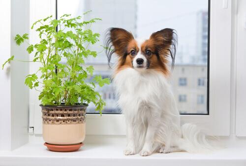 un cane seduto accanto alla finestra vicino a un vaso
