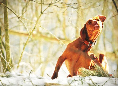 un cane si gratta in un bosco tra la neve