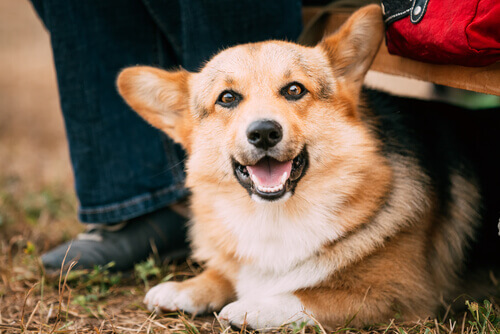 Aspetti legali per l'adozione di un cane