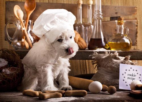 Dieta BARF, 3 ottime ricette da preparare a casa