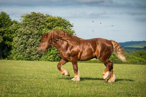 10 razze di cavalli da tiro più belle e potenti