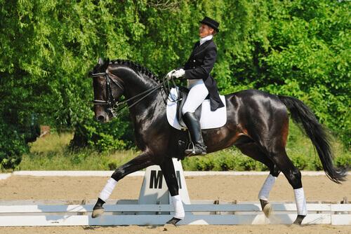 un cavallo elegante realizza un percorso di dressage