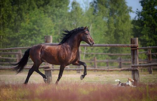 un cavallo marrone corre nel suo recinto
