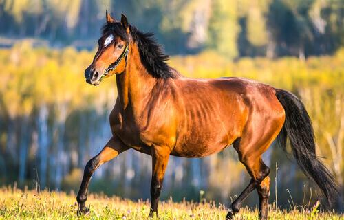un cavallo marrone passeggia all'aria aperta