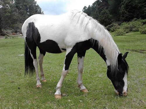 Come scegliere un cavallo nel modo giusto?