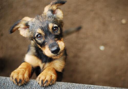 un cucciolo di cane in un rifugio per animali